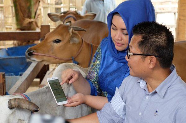 "XL Hadirkan Solusi Digital ""Satwa Nusantara"" Untuk Peternak Sapi"